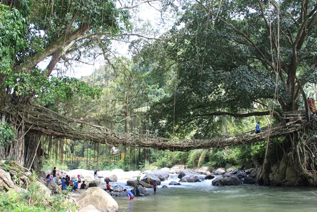 jembatan-akar-pesisir-selatan