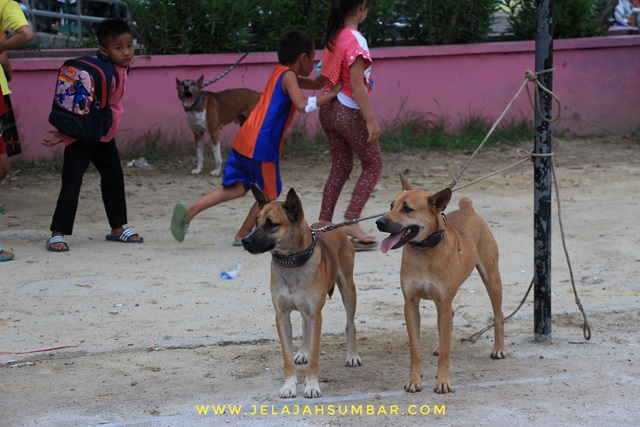 anjing peserta lomba