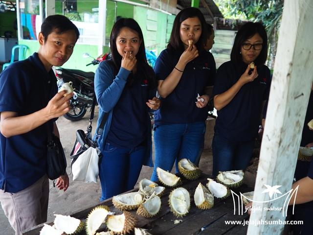 durian_kayu_tanam
